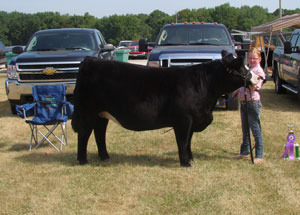 12-supreme-champion-heifer-iorquois-county-fair-taylor-talbert