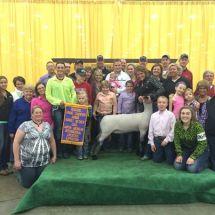13-Reserve Champion Market Lamb-NAILE-Sam Raute