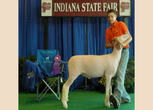 13-champion-4h-horned-dorset-market-lamb-indiana-state-fair-colton-ritz