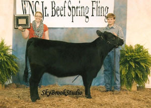 13-champion-angus-heifer-wnc-jr-beef-spring-fling-peyton-williams