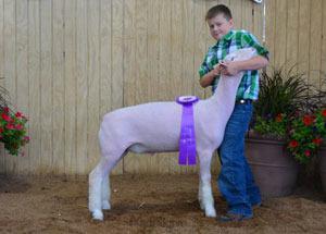 13-champion-aob-market-lamb-ohio-state-fair-austin-hunker
