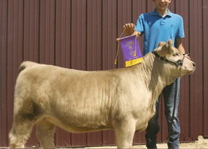 13-champion-beef-heifer-lenawee-county-fair-lucas-halsey