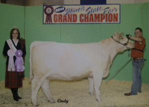 13-champion-division-shorthorn-heifer-illinois-state-fair-nathaniel-fanning
