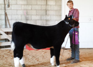 13-champion-feeder-calf-wyandot-county-fair-zach-altvader