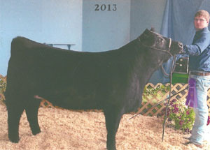 13-champion-heifer-doge-county-michael-brual
