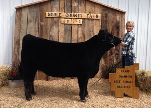 13-champion-heifer-noble-county-fair-taylor-west