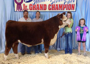 13-champion-hereford-steer-illinois-state-fair-emily-ulmer