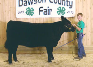 13-champion-market-heifer-dawson-county-fair-jace-russman