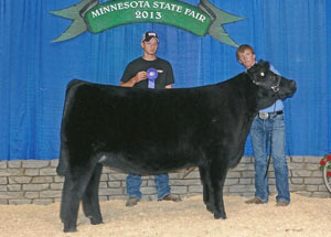 13-champion-market-heifer-minnesota-state-fair-spencer-wangen