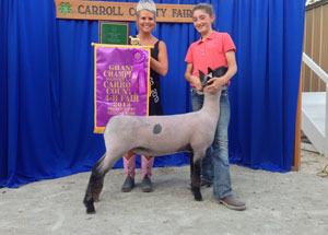 13-champion-market-lamb-carroll-county-fair-maddie-shiess