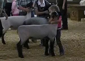 13-champion-market-lamb-waterford-fair-miley-reitz
