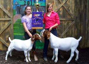 13-champion-pen-of-two-market-goats-vinton-county-fair-kiki-barlow