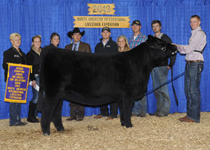 13-champion-percental-simmental-female-naile-tyler-adcock