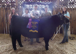 13-champion-pure-bred-steer-bedford-county-fair-jenna-siegel