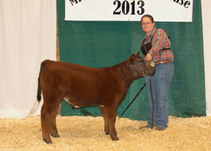 13-champion-shorthorn-plus-bull-michigan-beef-showcase-paige-youdes