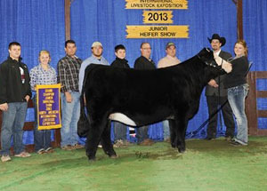13-champion-simmental-female-naile-megan-reed