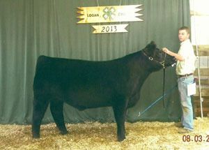 13-crossbred-class-winner-logan-county-fair-brandon-hickey