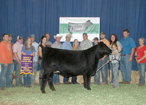 13-ef-zelda-division-4-champion-limflex-national-jr-limousin-sho