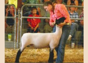 13-grand-champ-ewe-noble-co-jr-fair-katrina-harper