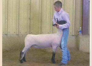 13-grand-champ-market-lamb-hillsdale-co-kade-shiery