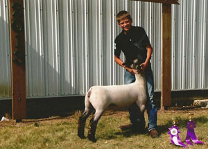 13-grand-champion-ewe-story-county-fair-kade-faga