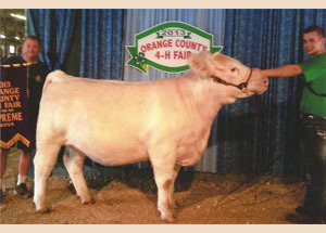 13-grand-champion-heifer-orange-county-4h-fair-andrew-bailey