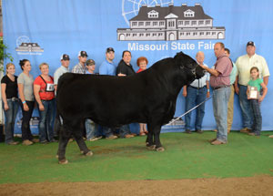 13-grand-champion-limousin-bull-missouri-state-fair