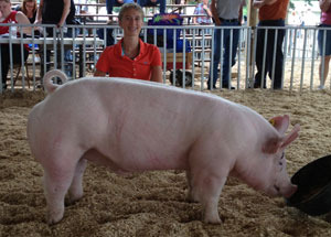 13-grand-champion-market-hog-eaton-county-fair-madalyn-stewart