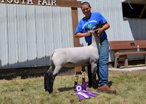 13-grand-champion-market-lamb-story-county-fair-bryce-niemeyer