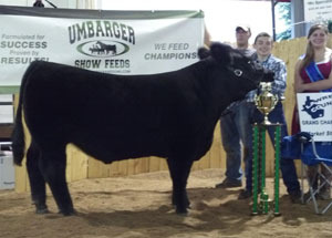 13-grand-champion-market-steer-lawrence-county-fair-4h-and-ffa-show-noah-lambert