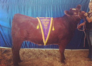 13-grand-champion-oakland-county-fair-tara-wilson