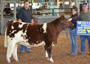 13-overall-beef-breeding-supreme-champion-gallia-county-jr-fair-josie-vanco