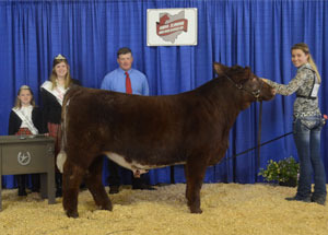 13-overall-steer-champion-state-shorthorn-show-taylor-morbitzer