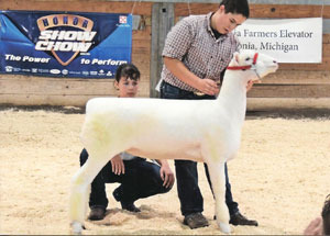 13-reserve-champion-dorset-ewe-all-american-jr-show-thomas-crome