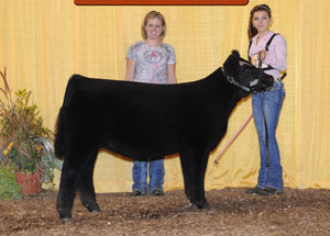 13-reserve-champion-maintainer-heifer-keystone-livestock-show-sami-korns