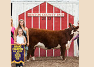 13-supreme-heifer-benton-county-4h-fair-hayley-musser