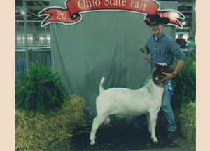 13-wether-sire-class-champion-ohio-state-fair-michael-burns
