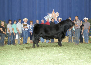 13-wlr-reload-grand-champion-bull-all-american-limousin-futurity