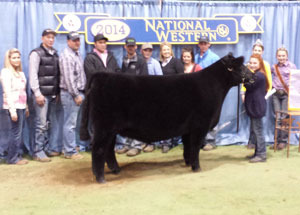 14-reserve-champion-high-maine-national-western-stock-show-open-show-lexi-wright