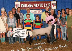 2012-champion-natural-colored-champion-shropshire-5th-overall-maket-lamb-indiana-state-fair-sammi-brewsaugh