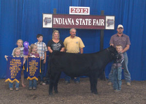 2012-champion-simmental-bull-indiana-state-fair-stetson–bennett