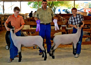 2012-grand-and-reserve-champion-market-lamb-will-county-fair-en-hanson
