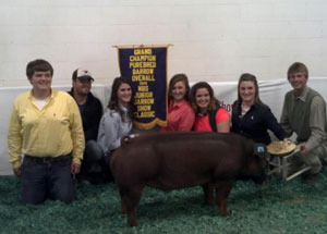 2012-grand-champion-barrow-national-barrow-show-maddi-butler