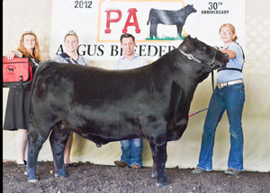 2012-grand-champion-born-and-raised-steer-PA-angus-breeders-show-adrianna-spangler
