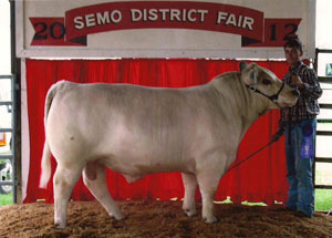 2012-grand-champion-bull-SEMO-district-fair-collin-schabbing