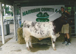 2012-grand-champion-county-born-and-bred-market-steer-harrison-county-fair-christopher-saulman