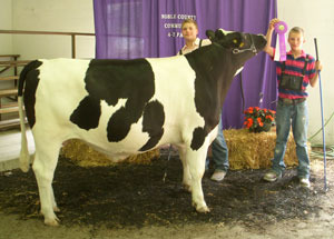 2012-grand-champion-dairy-steer-noble-county-preview-show-jake-templin