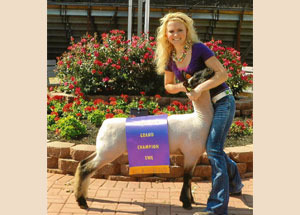 2012-grand-champion-ewe-mercer-county-fair-alyssa-muhlenkamp
