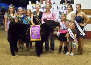 2012-grand-champion-feeder-calf-mason-county-fair-rebekah-dunham