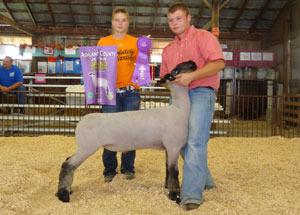 2012-grand-champion-market-lamb-ashland-county-fair-adam-heffelfinger